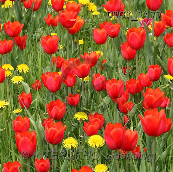 Gisela, FLOWERS, photos(DTGK1477,#F#) Blumen, flores, retrato
