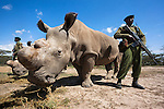 Rhino Anti-Poaching