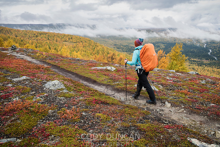 Female hiker takes in mountain view in colorful autumn landscape, near Aigert hut, Kungsleden trail, Lapland, Sweden