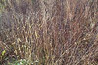 Trockene, verblühte Stauden im Garten stehenlassen, Stängel dienen als Unterschlupf für Insekten und andere Kleintiere, Verblühtes stehen lassen – Tieren im Garten helfen