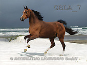 Bob, ANIMALS, collage, horses, photos(GBLA7,#A#) Pferde, caballos