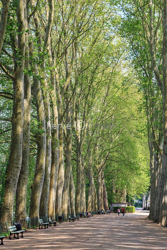 France, Cher (18), Bourges, le Jardin des Prés-Fichaux, allée de hauts platanes bordant la Voiselle // France, Cher, Bourges,  Pres Fichaux garden, Alley with tall plane trees lining the Voiselle