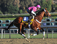 Mucho Macho Man , trained by Kathy Ritvo, trains for the Breeders' Cup Classicat Santa Anita Park in Arcadia, California on October 30, 2013.
