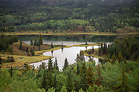 Mixed Boreal Forest along Alaska Highway near Lower Post, Northern BC, British Columbia, Canada, Summer