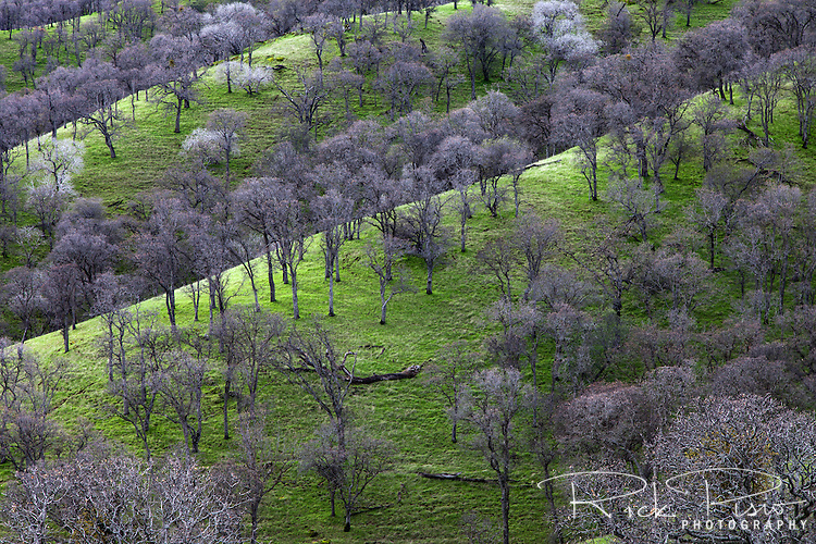 The bare branches of the dormant oak trees in winter at Round Valley Regional Preserve near Byron, California.
