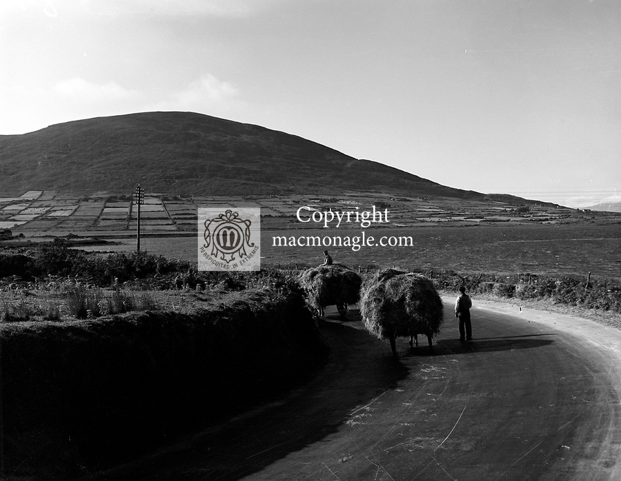 Farmers bring home the hay in Dingle in the 1960's..Picture by Harry MacMonagle