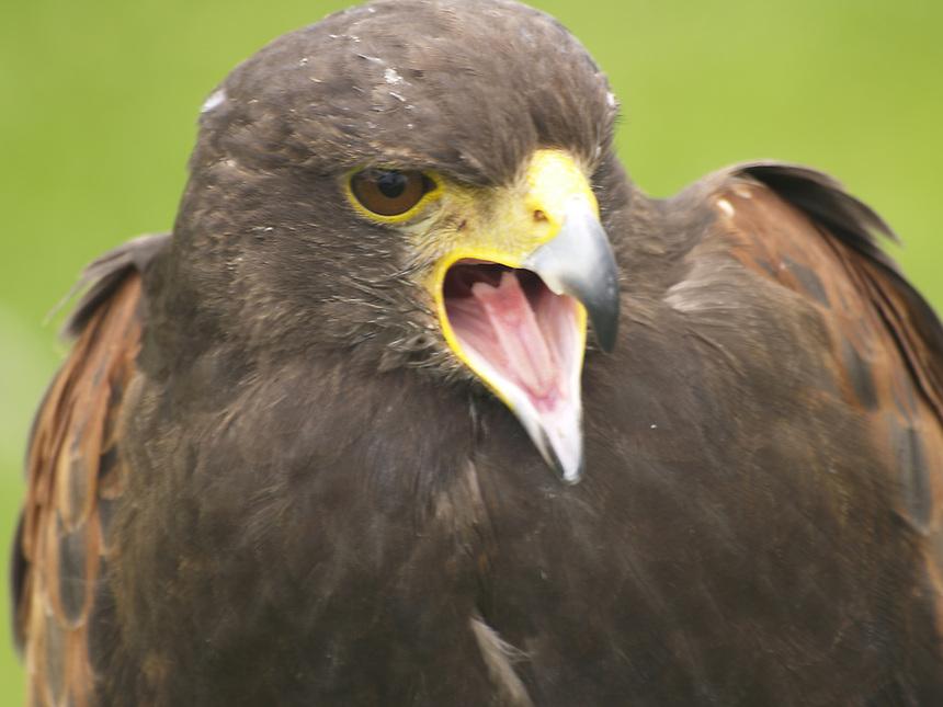 Birds of Prey, Big Birds, Wild Birds,