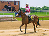 A Rose For Lizzy winning at Delaware Park on 6/14/17