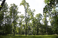 FOREST_LOCATION_90083