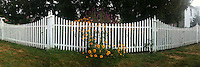 White picket fence with flowers with iPhone 3G2 and QuadCamera app.