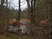 Scatter Creek is high in winter at the Scatter Creek Wildlife Area in Rochester, Washington.