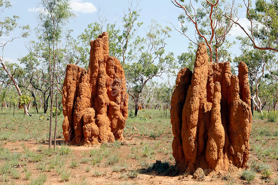 Termite mounds, northern Australia.