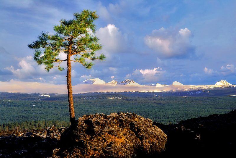 Ponderosa Pine growing in AA lava with Cascade peaks. Newberry National Volcanic Monument, Oregon