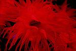 Corals -Polyps-Anemones-Urchins