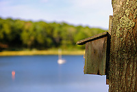 Birdhouse attached to a tree overlooking a lake.