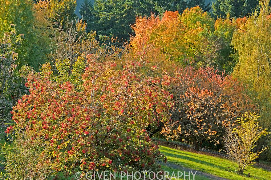 Hoyt Arboretum in autumn, Portland, Oregon
