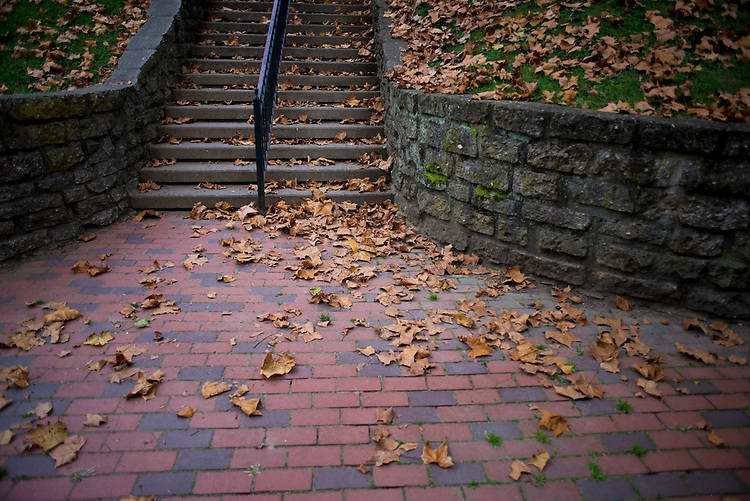 Leaves falling down a staircase of the Scripps Ampitheatre.