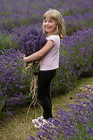Portrait of a little girl smiling at the camera as she clasps bunches of freshly cut lavender