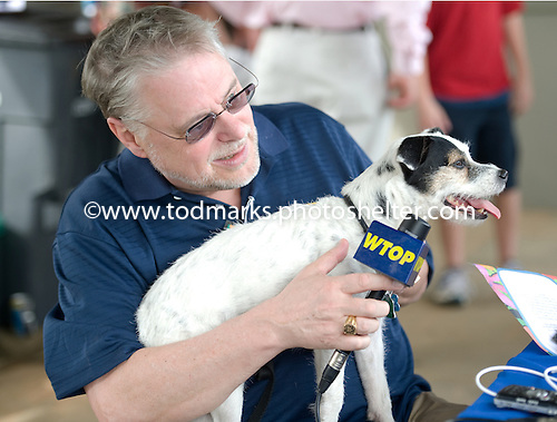 A radio announcer interviews one of the winners of the Jack Russell Terrier races at Great Meadow.