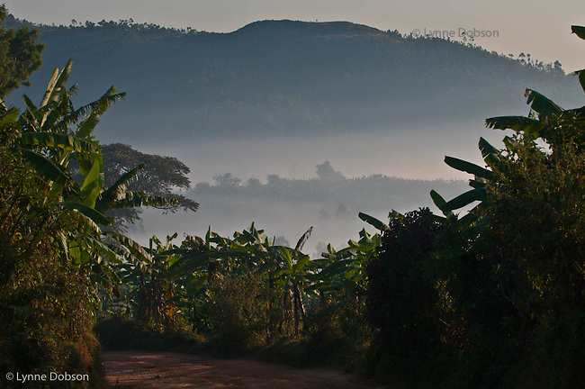 Morning mountains in Songa, Burundi.