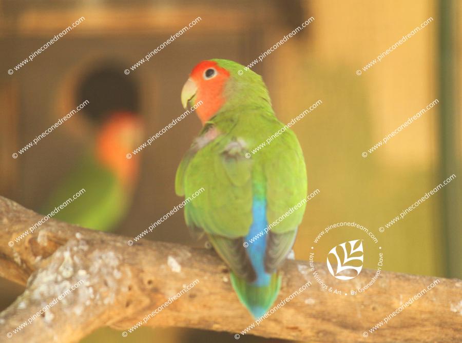 Cute beautiful lovebird sitting on a tree-branch in zoo