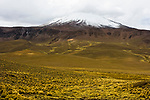 Dry puna and snow-covered volcano, Abra Granada, Andes, northwestern Argentina