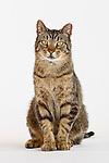 20170217 Sarah cats