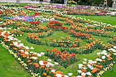 Luiz, FLOWERS, photos, BRLH8689,#f# Blumen, Natur, flores, naturaleza