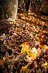 Forest floor, foliage, autumn, fall