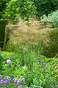 Stipa gigantea, Great Dixter, early June