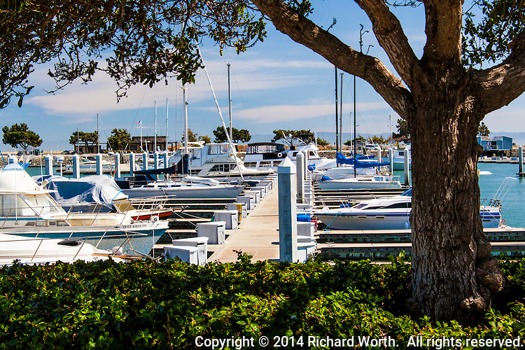 A view of boats moored at the San Leandro Marina with a tree and shrubs in the foreground.