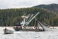 Sitka Herring Roe fishery 2016, Southeast Alaska.