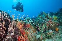 Underwater at Bovacoap Point.St. John.U.S. Virgin Islands