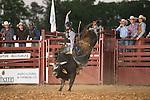 SEBRA - Powhatan, VA - 5.23.2015 - Bulls & Action