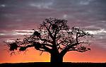 Wildlife - Kruger PArk