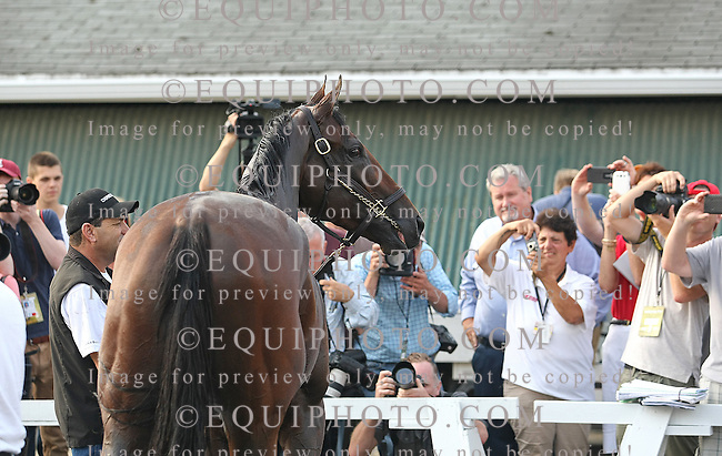 Triple Crown Champion American Pharoah smiles for the cameras during his morning bath at Monmouth Park in Oceanport, New Jersey on Thursday morning July 30, 2015.  American Pharoah will be the heavy favorite for Sunday's $1,750,000 Haskell Invitational at the Jersey Shore Oval. Photo By Bill Denver/EQUI-PHOTO