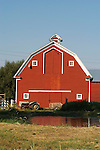 Red barn, white trim, cupola, gambrel-style roof, Ford tractor, pond, Black Knight Ranch of southern Washington.