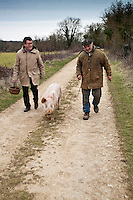 Europe/Europe/France/Midi-Pyrénées/46/Lot/Env de Lalbenque: Christain Constant s'initie  au cavage  avec le cochon, avec Mr Oulié, Trufficulteur (Recherche) des truffes sur le causse . [Non destiné à un usage publicitaire - Not intended for an advertising use]
