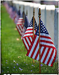 American Flags stand tall at the Los Angeles National Cemetery Los Angeles, CA. May 30, 2014.