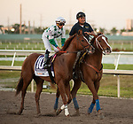 HALLANDALE BEACH, FL - March 3: Promises Fulfilled, #10, in post parade with jockey Irad Ortiz for the Xpressbet Fountain of Youth Stakes (Grade II) at Gulfstream on March 3, 2018 in Hallandale Beach, FL. (Photo by Carson Dennis/Eclipse Sportswire/Getty Images.)
