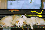 Two dogs cuddle together while sleeping on a bench in Hakuba, Japan.
