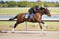 #32Fasig-Tipton Florida Sale,Under Tack Show. Palm Meadows Florida 03-23-2012 Arron Haggart/Eclipse Sportswire.