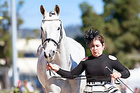 AUS-Tayah Andrew with Silver Force during the CCI2*YR First Horse Inspection at the 2016 AUS-Australian International 3DE. Wednesday 2 November. Photo Copyright: Libby Law Photography
