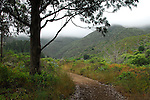 McNee Ranch State Park, Montara Mountain