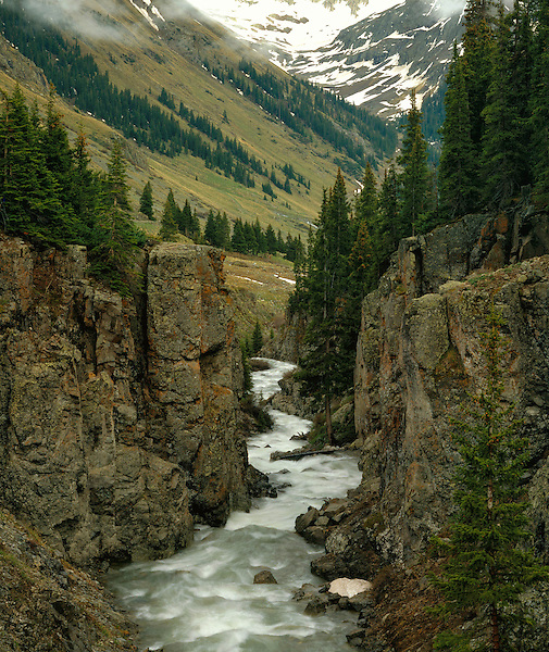 Las Animas River in the San Juan Mountains, Silverton, Colorado, USA .  John leads wildflower photo tours into American Basin and throughout Colorado. All-year long.