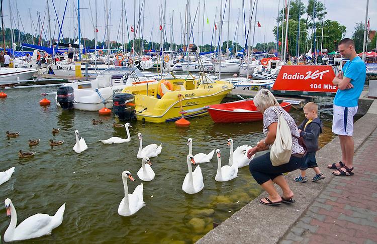 Mikołajki 2009-08-11. Karminie łabędzi w basenie portu jachtowego w Mikołajkach
