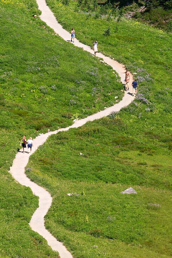 People hiking on trail winding through subalpine meadow, Edith Creek Basin, Paradise, Mount Rainier National Park, Pierce County, Washington, USA