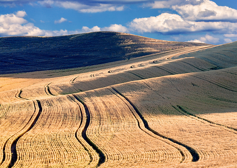 Planting lines in wheat field. The Palouse, Washington. A sky has been added.