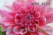 Gisela, FLOWERS, BLUMEN, FLORES, photos+++++,DTGK2143,#f#