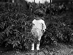 Point Breeze:  Helen Stewart walking in her grandfather's Victory Garden - 1918. During this time the Stewart's lived at 6705 Thomas Street in Point Breeze